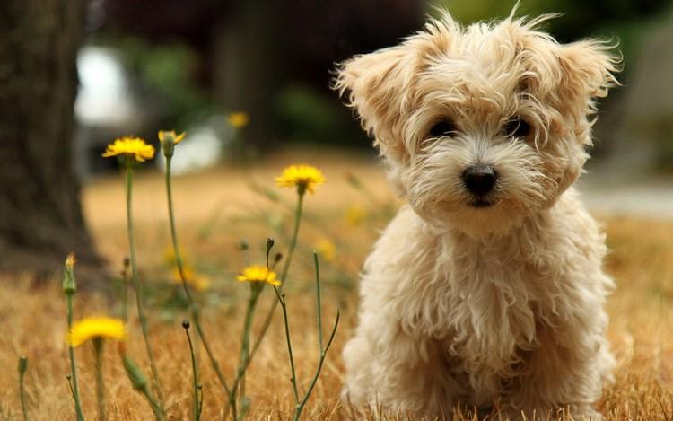 As razões de certos estranhos comportamentos dos cães