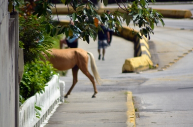Cavalo solto na Via Expressa (Arquivo AVS)