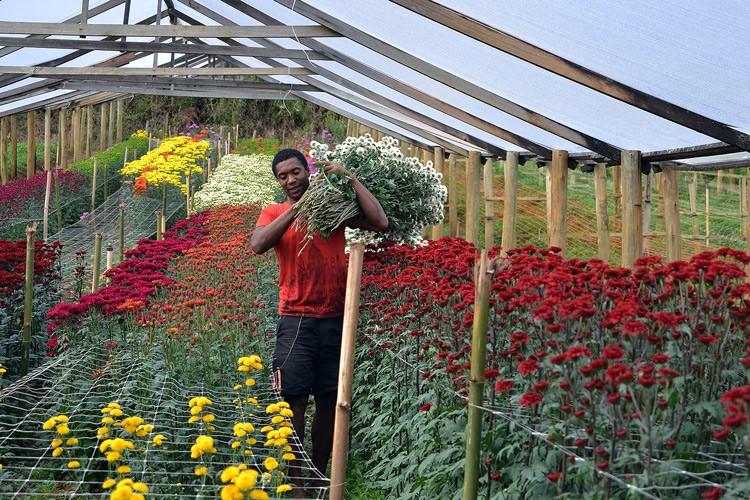 Produção de flores em Vargem Alta (Foto: Henrique Pinheiro)