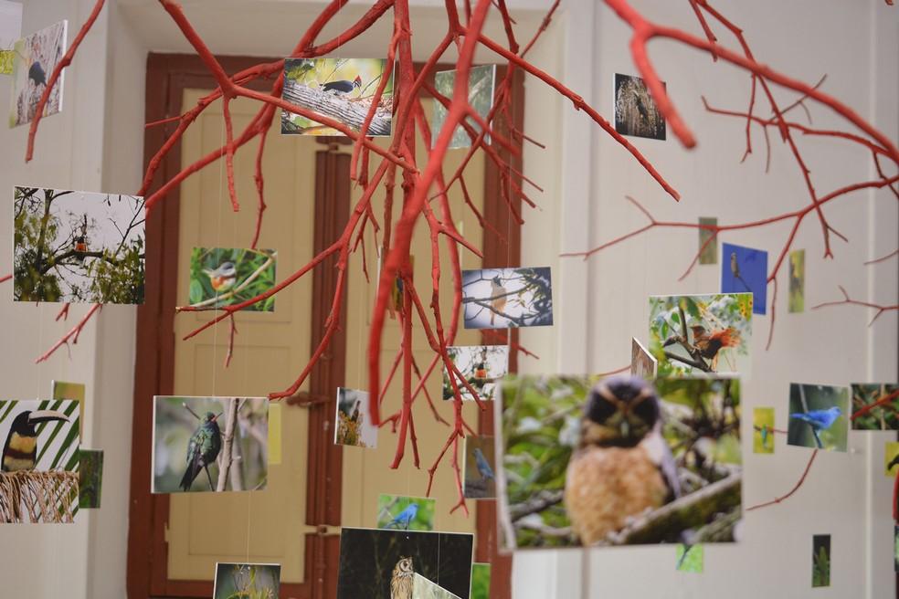Um dos espaços reproduz pássaros numa floresta (Arquivo AVS)
