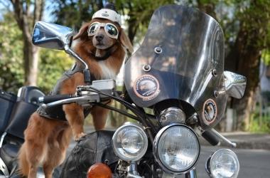 Nick e sua moto: mas que união feliz! (Fotos: Henrique Pinheiro)