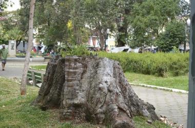 Eucalipto da Praça Getúlio Vargas cortado (Foto: Henrique Pinheiro)