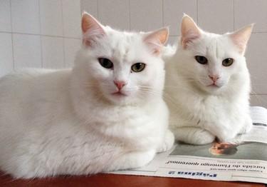 Curiosidades sobre os gatos que você certamente não sabe