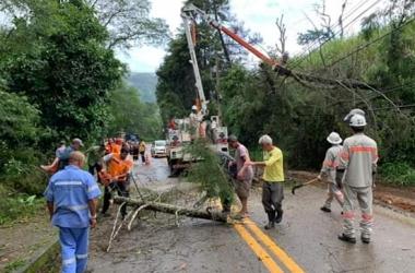 Remoção de árvore derrubada por temporal em Amparo (Fotos de leitores)