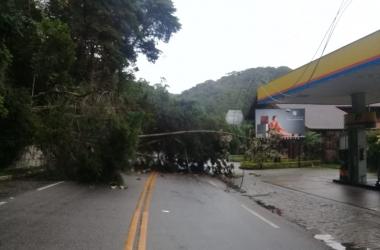 A RJ-116 bloqueada por queda de árvore em Mury (Foto de leitor)