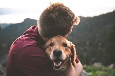 Amigão-cão: cachorros esbanjam amor e aproximam as pessoas