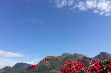 Céu azul e buganvília florida no Bairro Suíço (Foto: Adriana Oliveira)