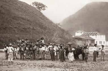 Escravos numa fazenda de café (Arquivo AVS)