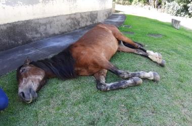 O cavalo caído na beira da rua (Foto de leitor)
