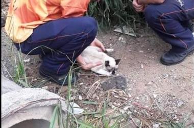 O gato supostamente agredido sendo resgatado por funcionários do supermercado (Reprodução da web)