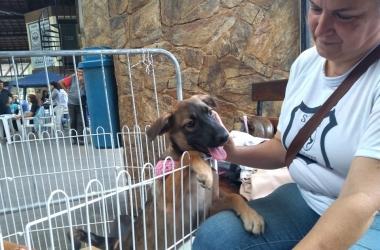Cachorrinho à espera de adoção com uma funcionária da Ssubea (Fotos: Guilherme Alt)