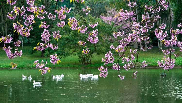Jardins do Nova Friburgo Country Clube (Foto: Arquivo A VOZ DA SERRA)