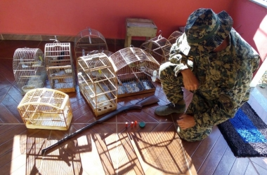 Os pássaros eram mantidos em gaiola de madeira (Divulgação)