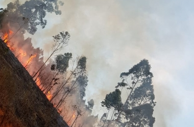 Controlado incêndio que destruiu 8 hectares de mata em Friburgo
